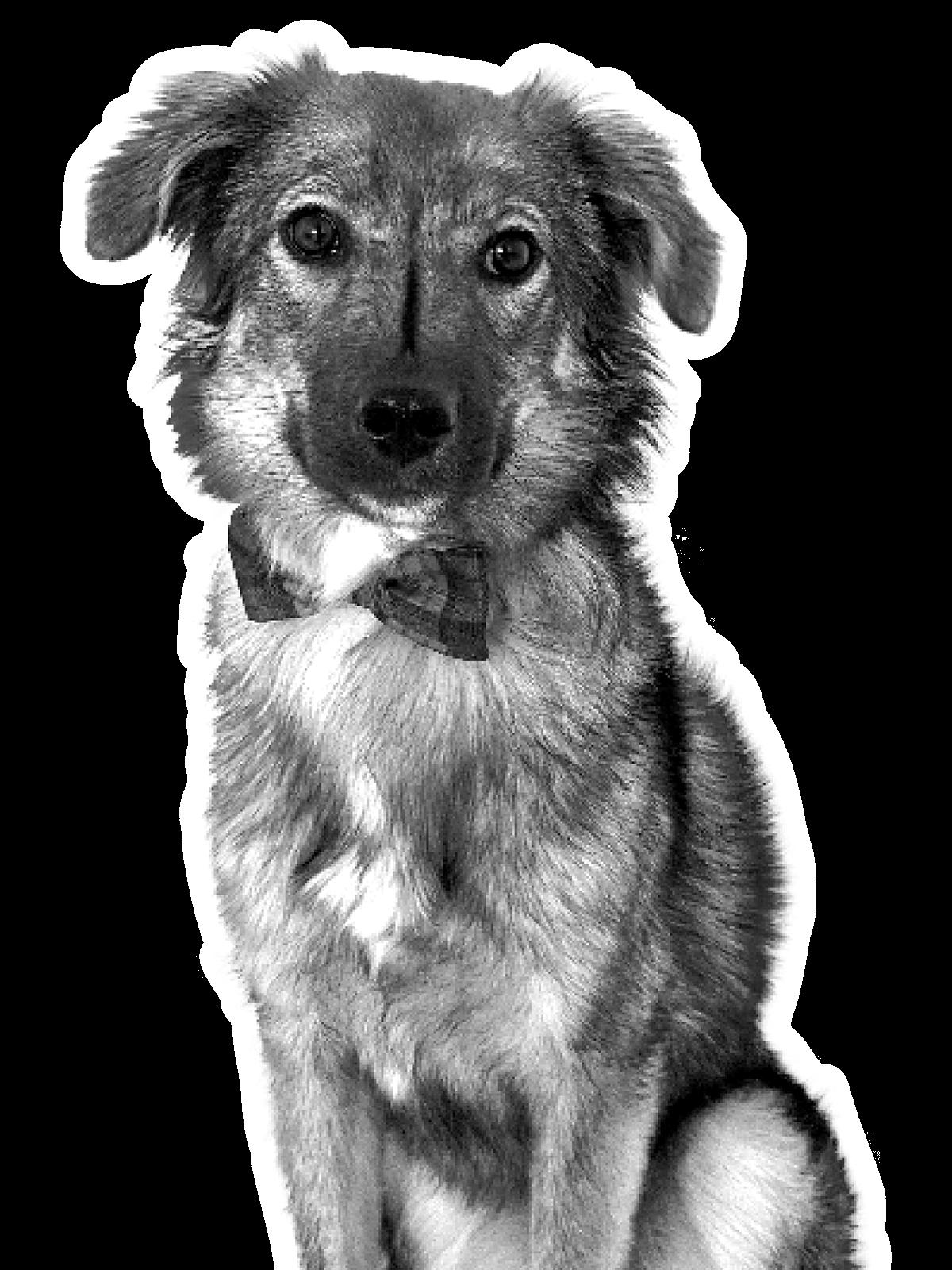 Bürohund Leo